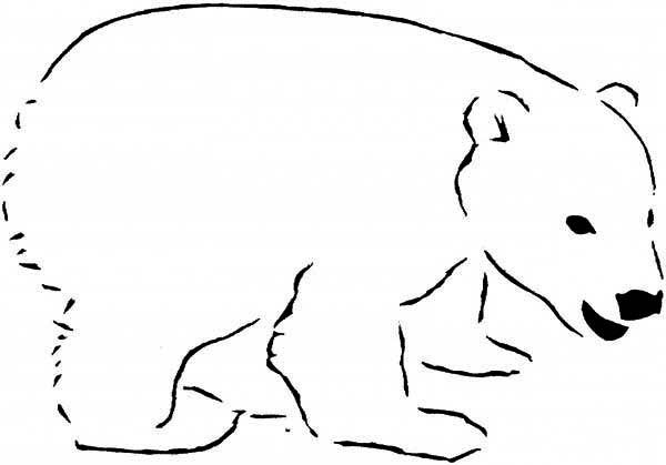 Polar Bear Coloring Sheet  Cartoons