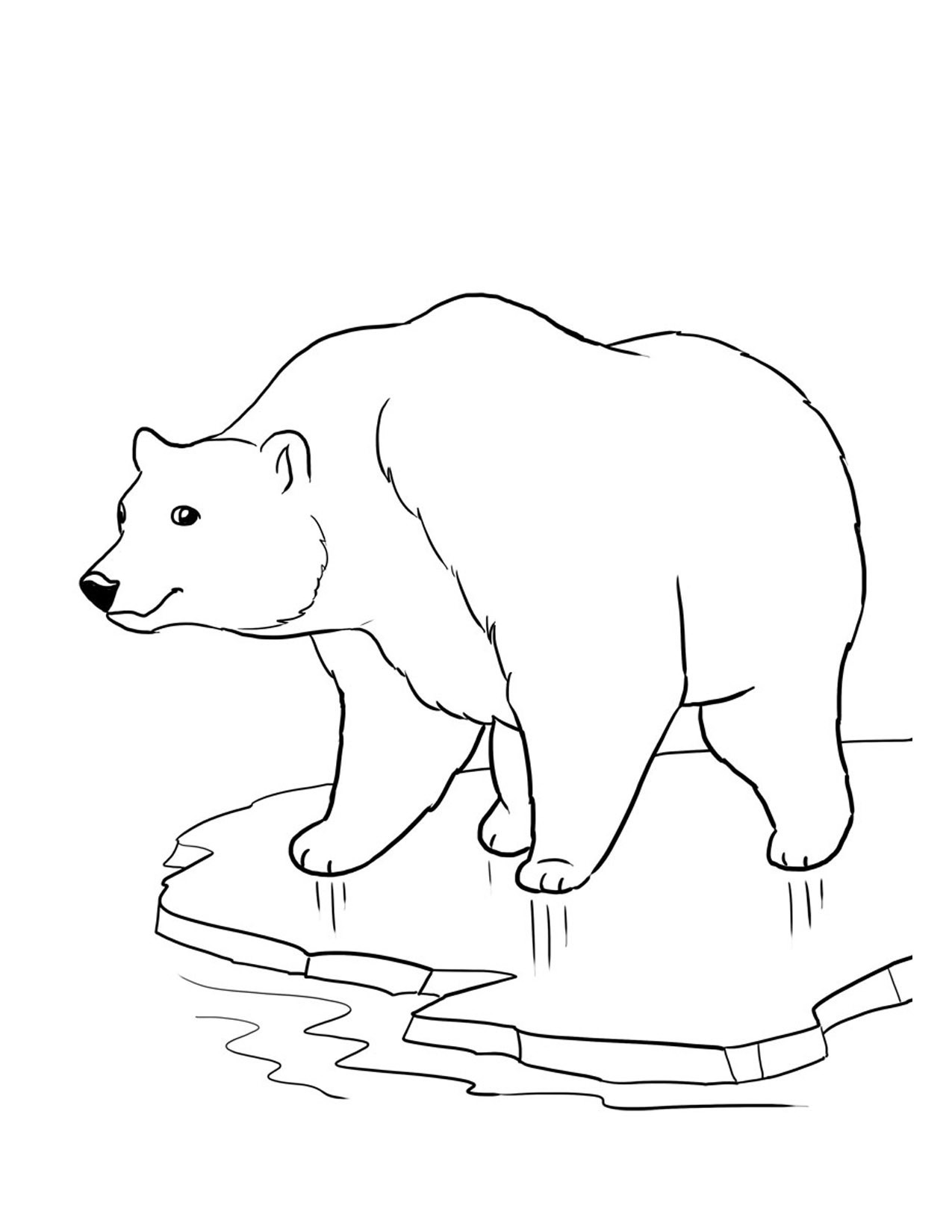 Polar Bear Coloring Sheet  Free Printable Bear Coloring Pages For Kids