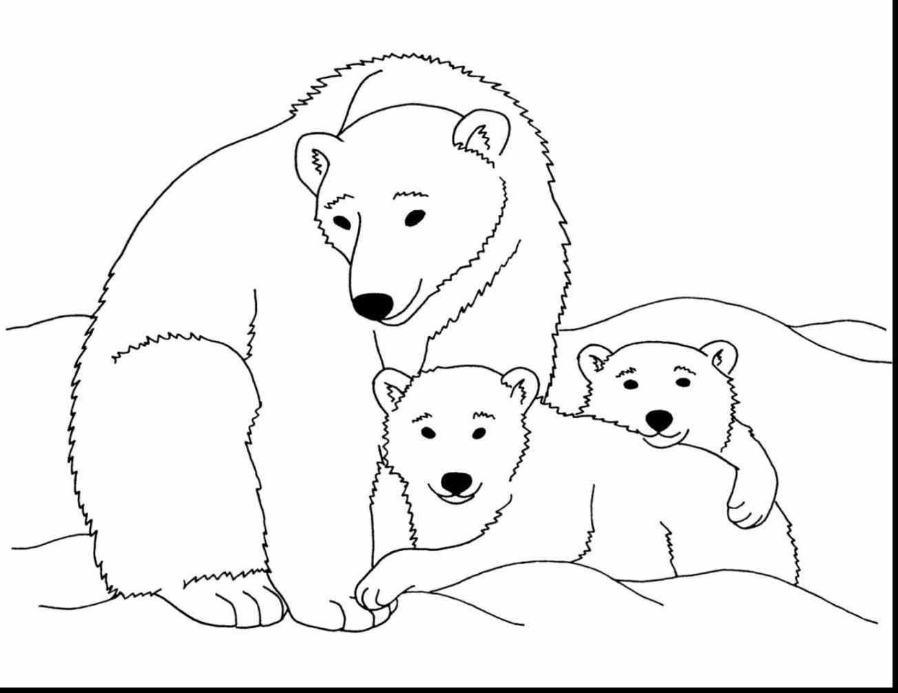 Polar Bear Coloring Sheet  Polar Bear Coloring Sheet Page Image Clipart