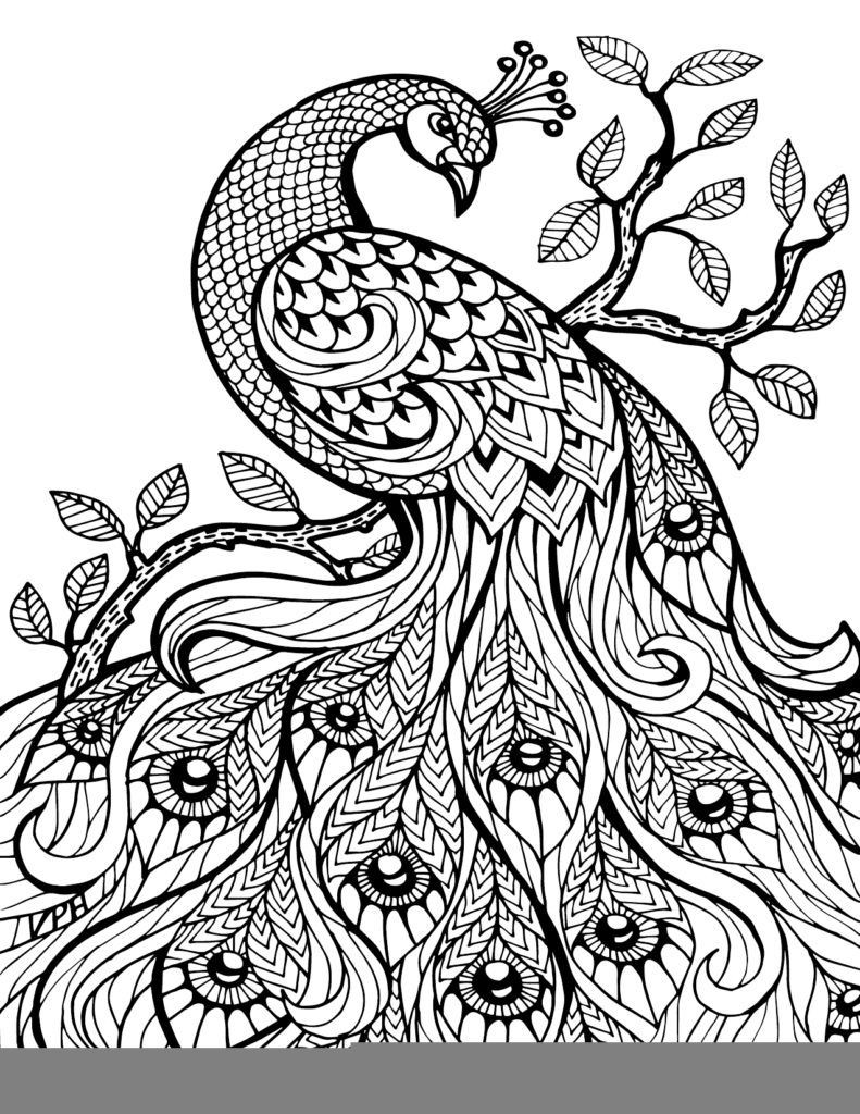 Printable Adult Coloring Books  Free Printable Paisley Coloring Pages For Adults AZ