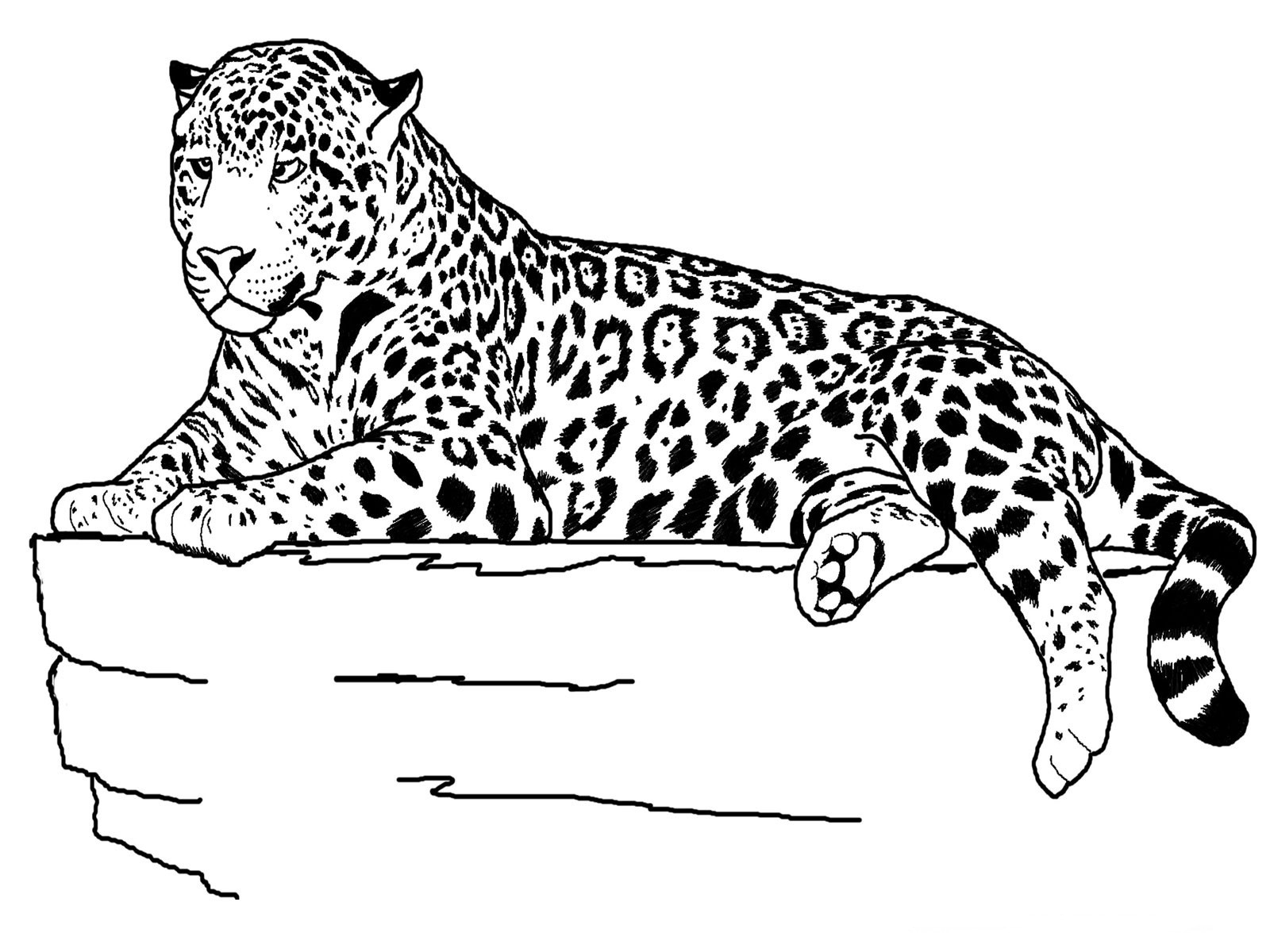 Printable Coloring Pages Of Animals  Free Printable Cheetah Coloring Pages For Kids