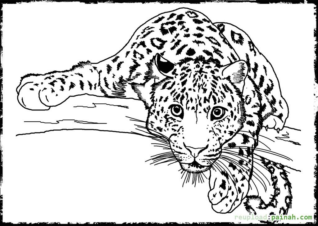 Printable Coloring Pages Of Animals  Detailed Animal Coloring Pages Bestofcoloring