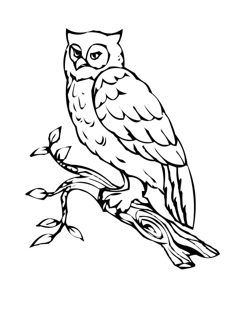 Printable Coloring Sheets Free  Free Printable Owl Coloring Pages For Kids