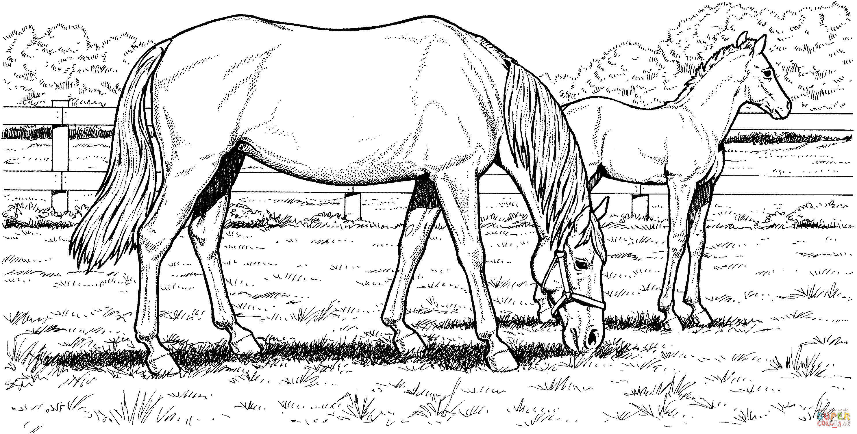 Printable Horse Coloring Pages For Adults  Free Horse Coloring Pages For Download
