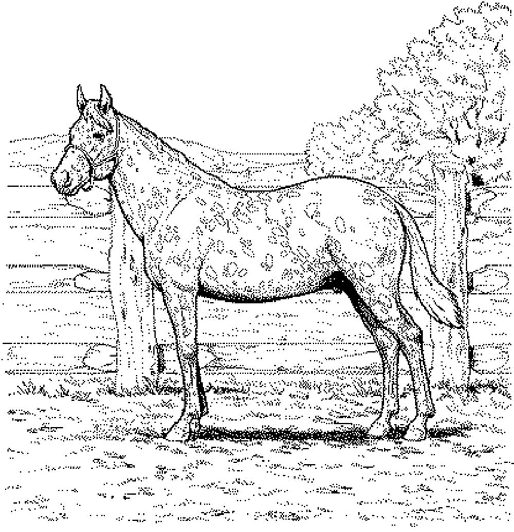 Printable Horse Coloring Pages For Adults  Free Printable Horse Coloring Pages For Adults Coloring Home