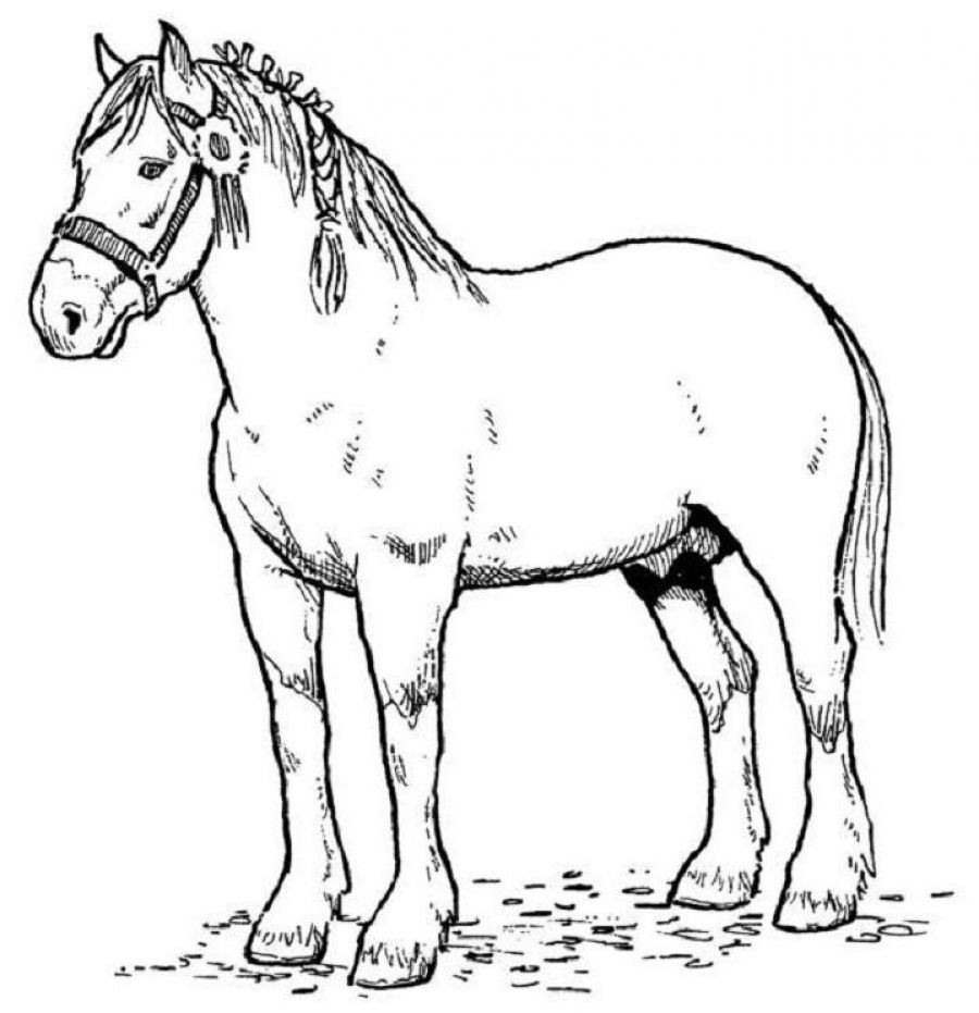 Printable Horse Coloring Pages For Adults  horse coloring pages