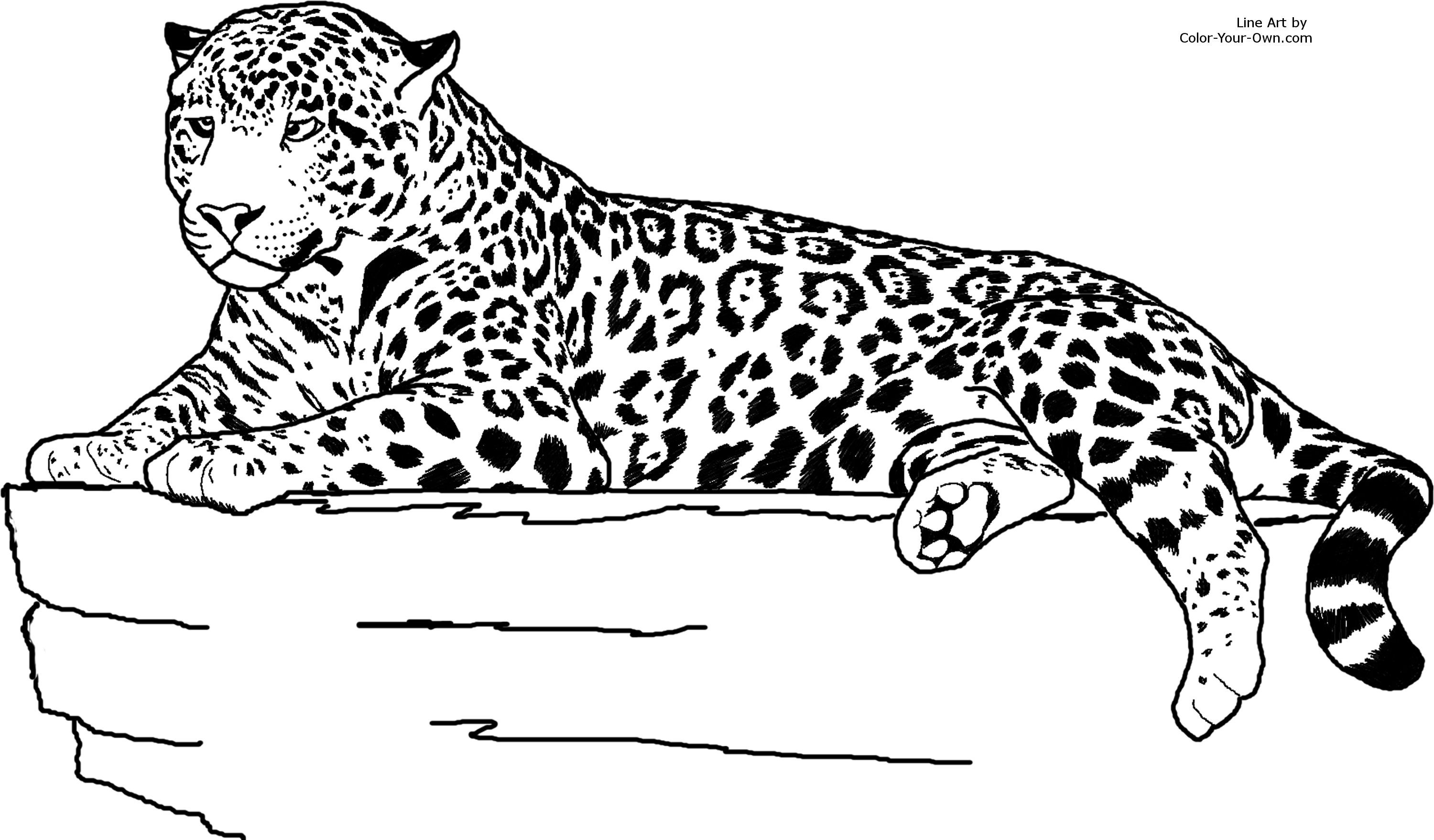 Realistic Animal Coloring Pages  Realistic Jaguar Animal Coloring Pages PINTEREST