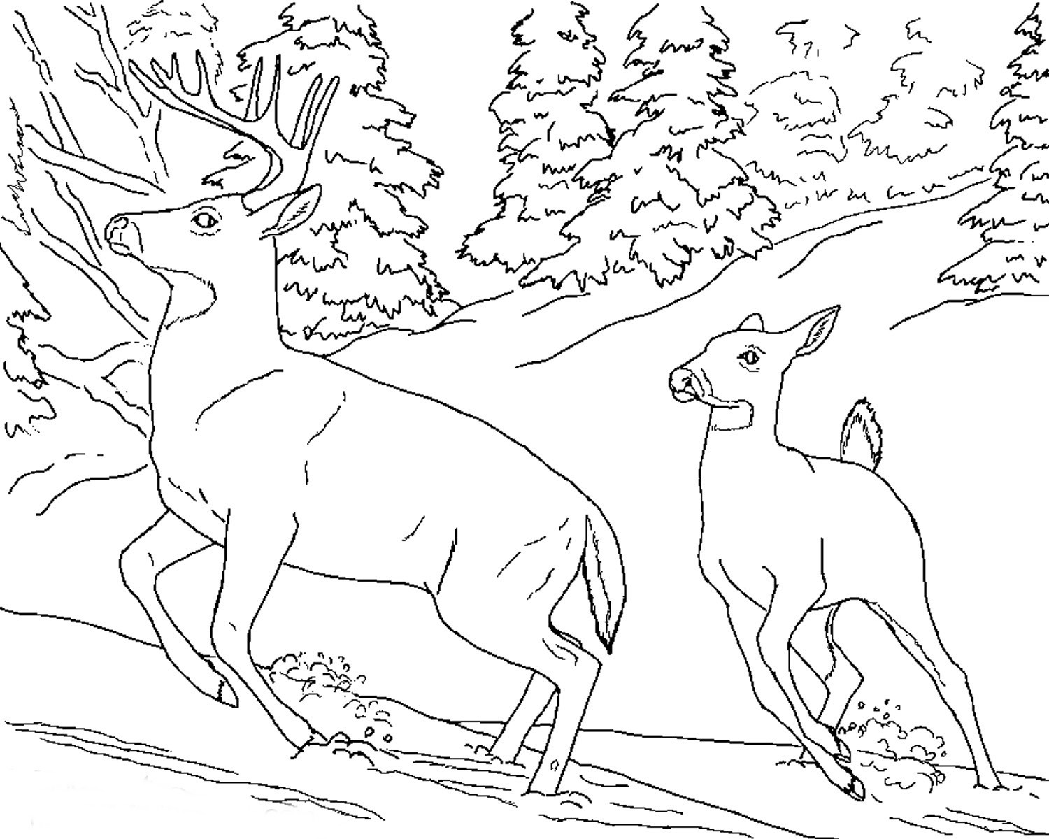 Realistic Animal Coloring Pages  Free Realistic Animal Coloring Pages