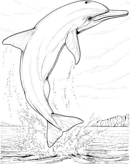 Realistic Animal Coloring Pages  Realistic Animal Coloring Pages – Color Bros