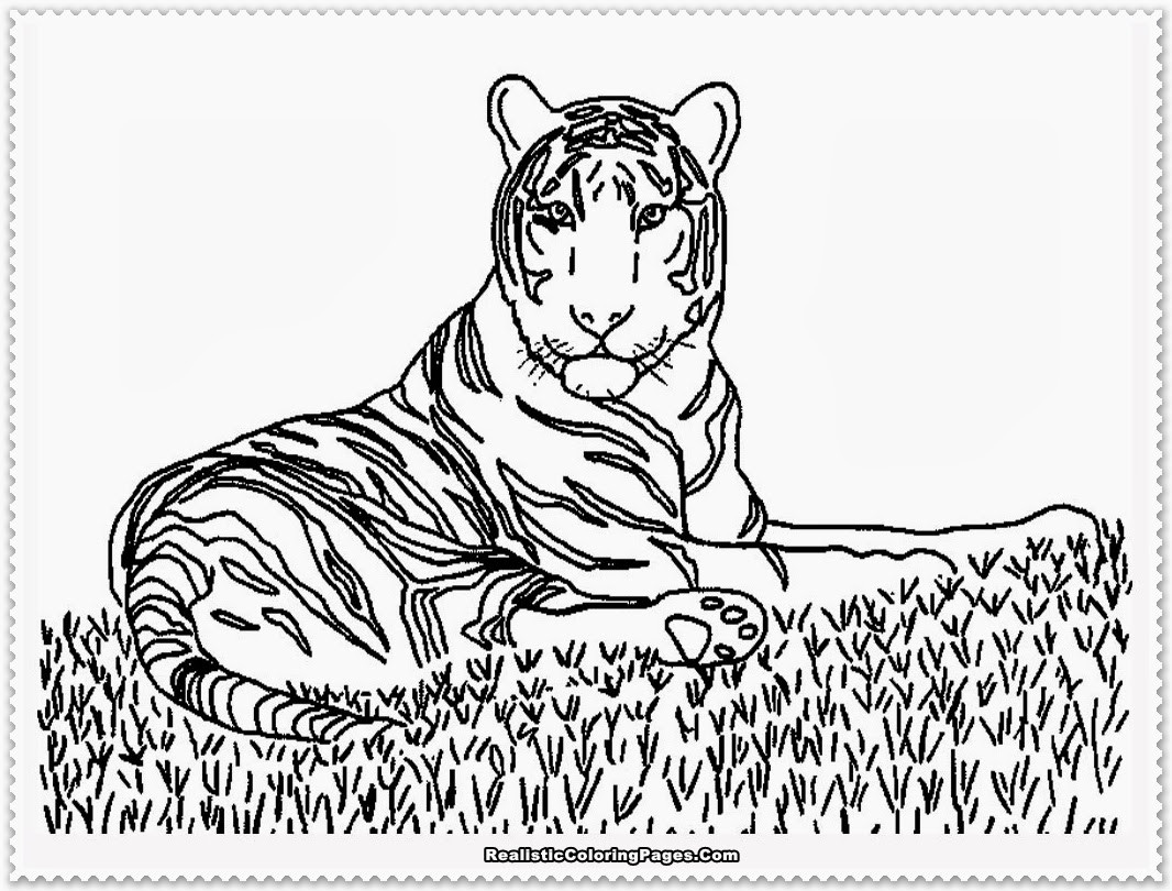 Realistic Animal Coloring Pages  realistic animals coloring pages