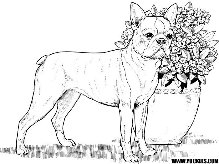 Realistic Animal Coloring Pages  Realistic Animal Coloring Pages For Kids Coloring Pages