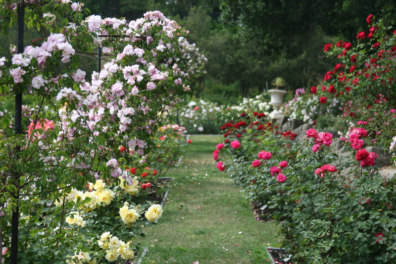 Best ideas about Rose Garden Ideas . Save or Pin Oakland Rose Garden Living In The O design bookmark Now.
