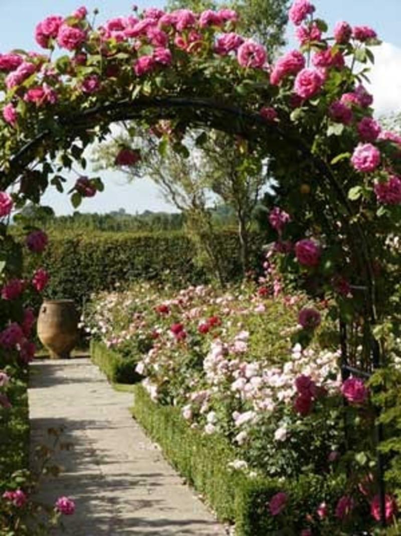 Best ideas about Rose Garden Ideas . Save or Pin American Garden Ideas Now.