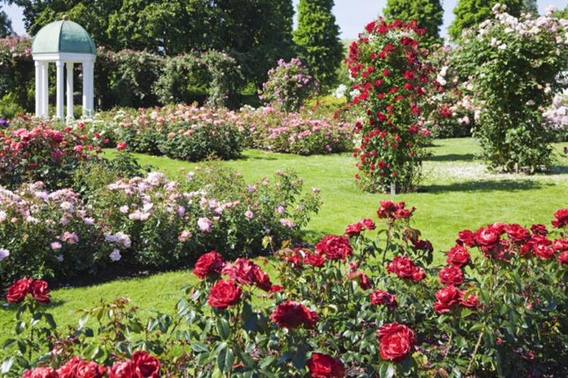 Best ideas about Rose Garden Ideas . Save or Pin Rose Garden design bookmark 7600 Now.