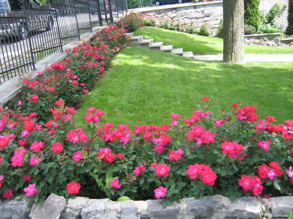 Best ideas about Rose Garden Ideas . Save or Pin 25 Rose Garden Design Ideas ideacoration Now.