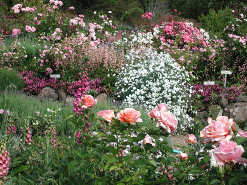 Best ideas about Rose Garden Ideas . Save or Pin Garden design bookmark Now.