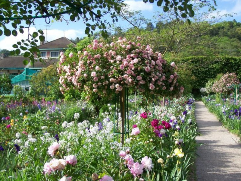 Best ideas about Rose Garden Ideas . Save or Pin Rose Garden Blossom s And Painting Flowers Now.