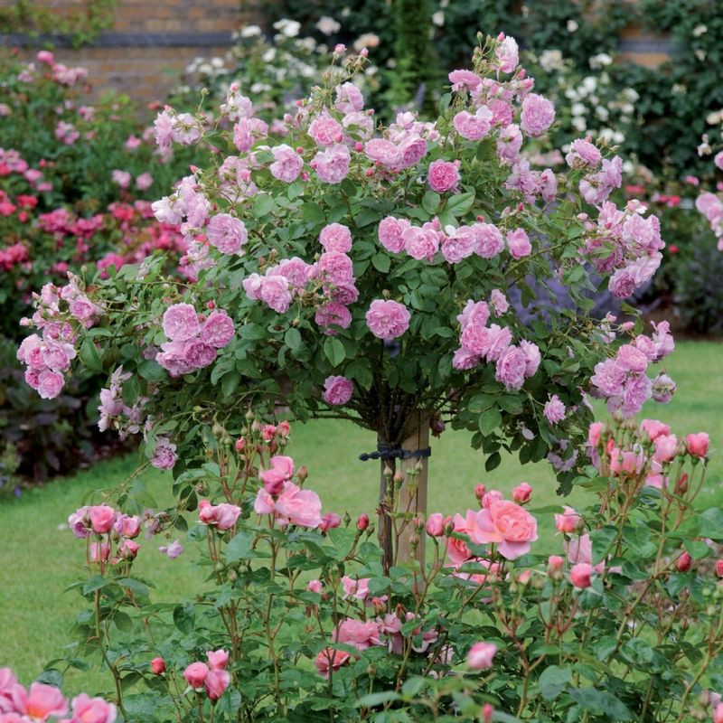 Best ideas about Rose Garden Ideas . Save or Pin How to Create Beautiful Garden Decoration with Roses Now.