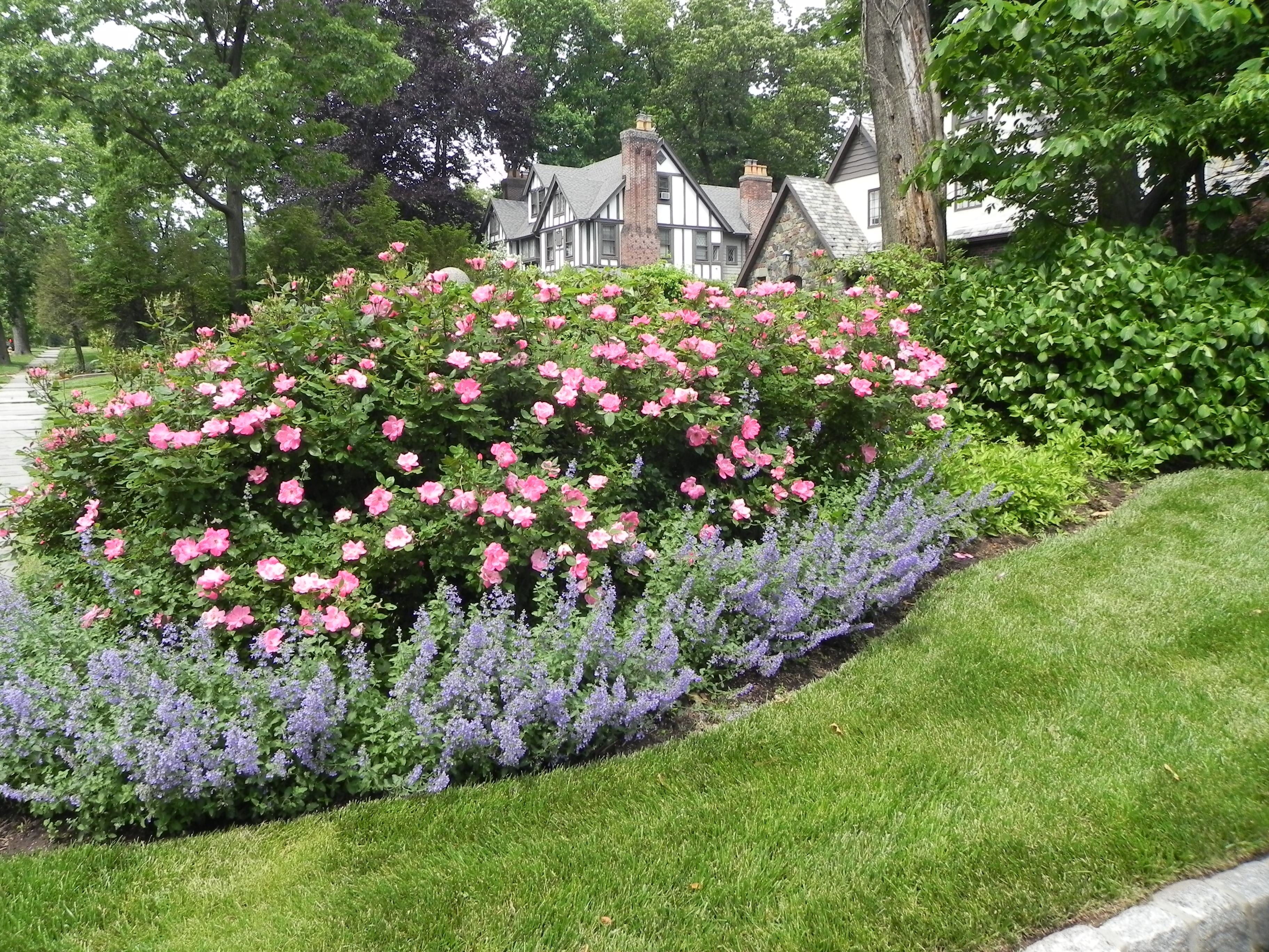 Best ideas about Rose Garden Ideas . Save or Pin Nice Rose Garden Design Garden Design 10 Now.