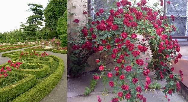 Best ideas about Rose Garden Ideas . Save or Pin Rose Garden Ideas Home Ideas Modern Home Design Now.