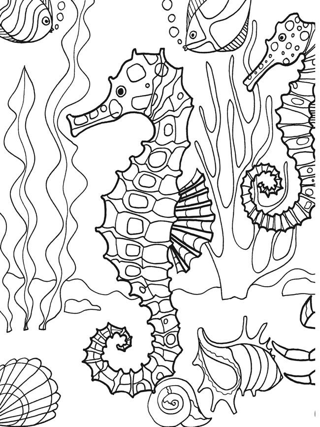 Seahorse Coloring Pages For Adults  Coloring for adults Kleuren voor volwassenen