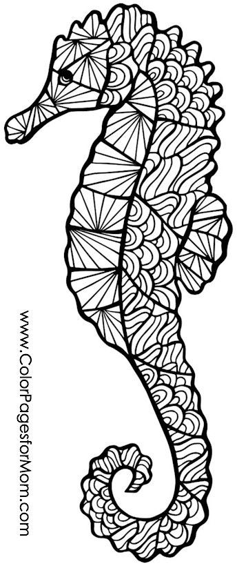 Seahorse Coloring Pages For Adults  Seahorse coloring page