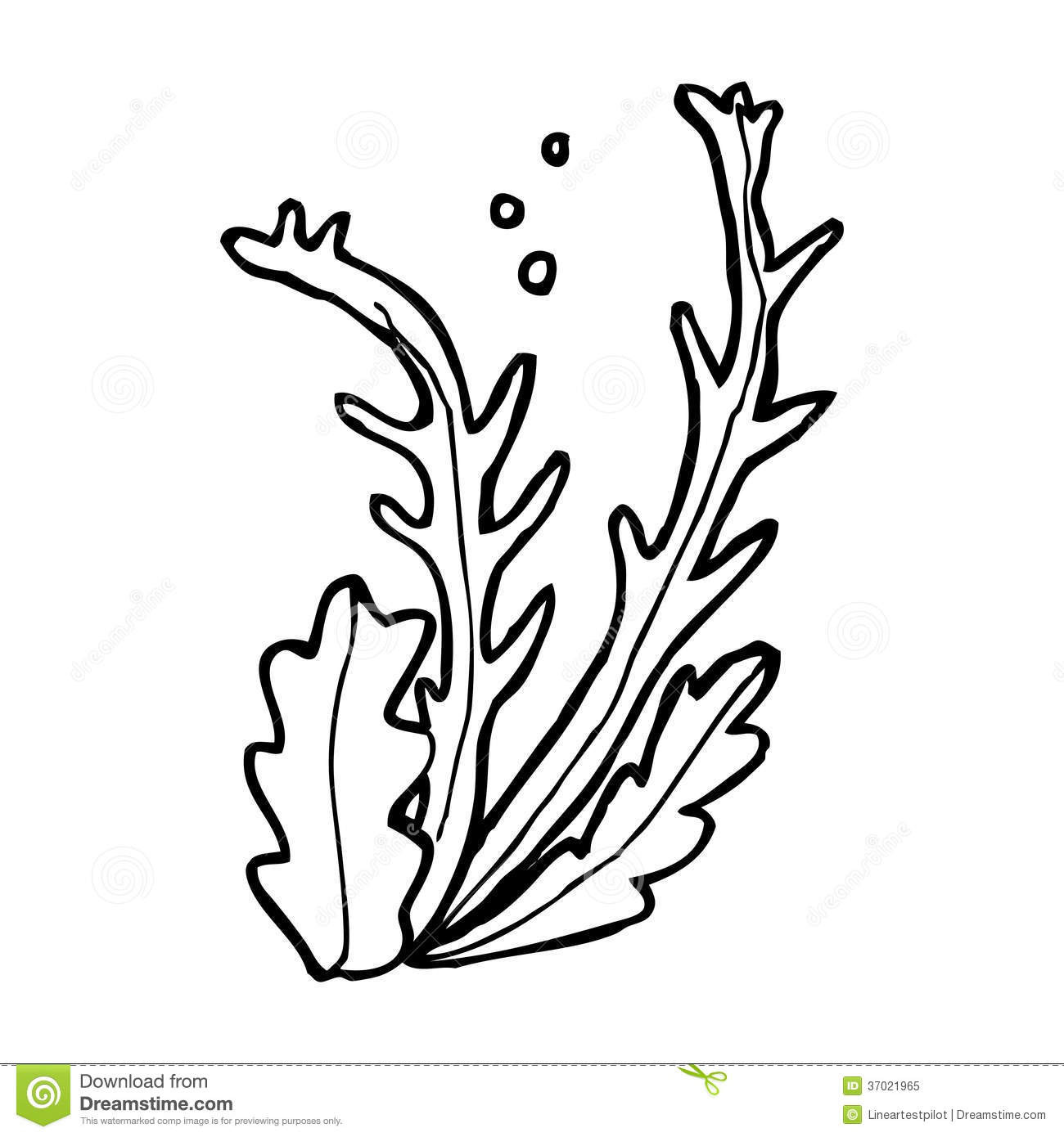 Seaweed Coloring Pages  Seaweed clipart black and white Pencil and in color