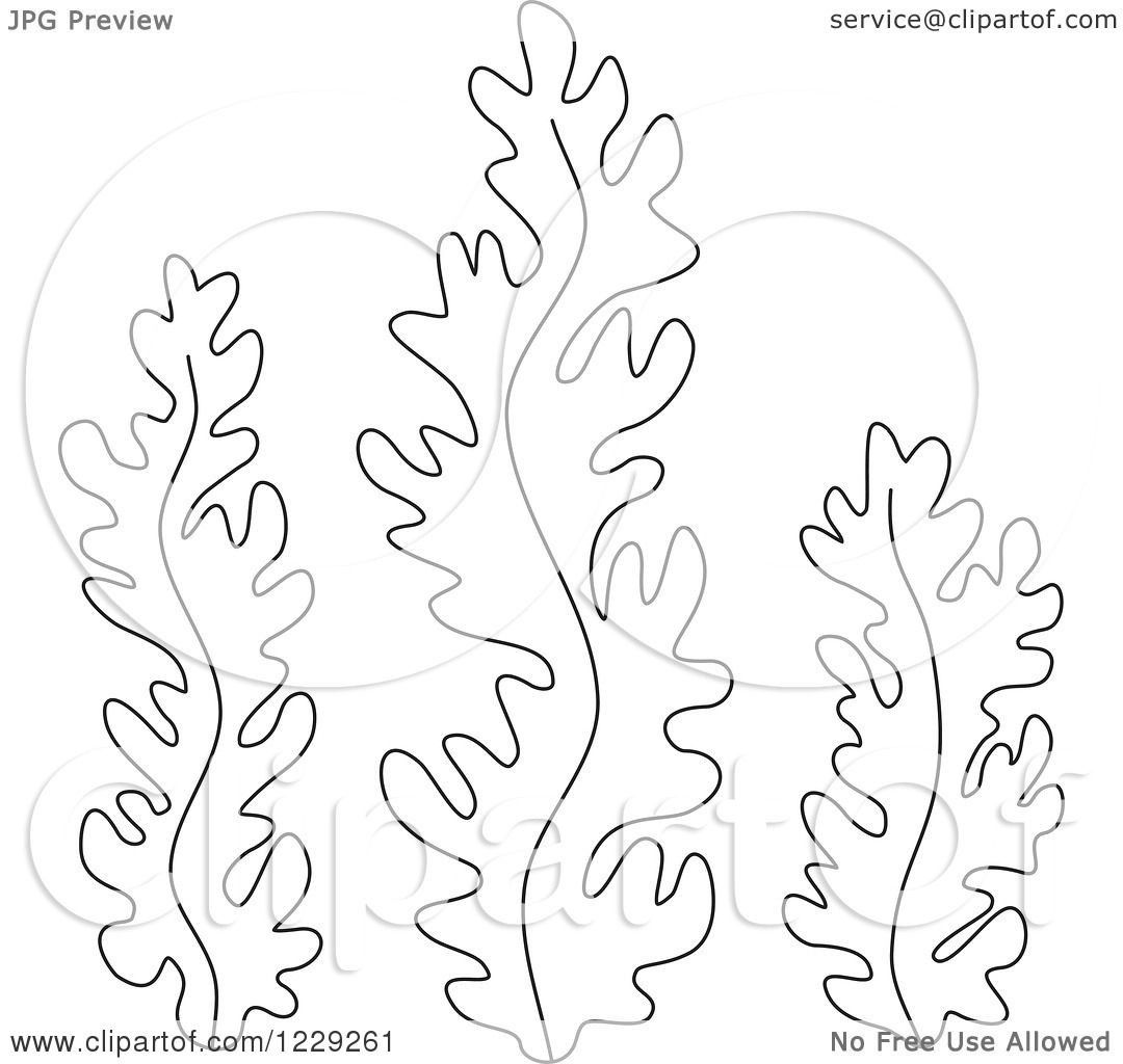 Seaweed Coloring Pages  Clipart of Outlined Seaweed Royalty Free Vector