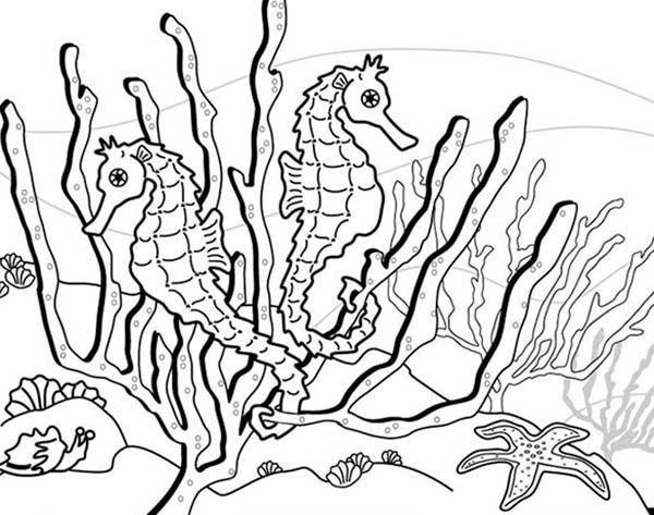Seaweed Coloring Pages  Seaweed Coloring Pages To Print Out Cartoon Panda grig3