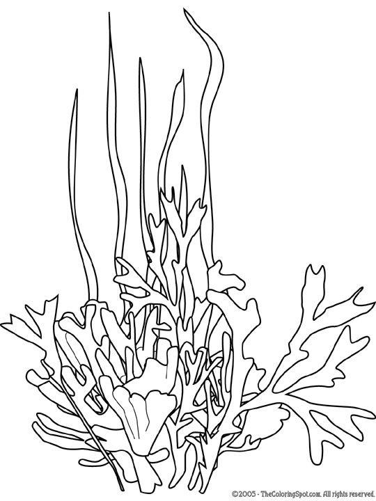 Seaweed Coloring Pages  seaweed Google Search