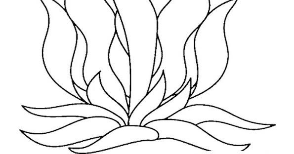 Seaweed Coloring Pages  Seaweed Coloring Pages