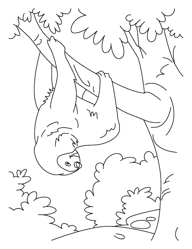 Sloth Coloring Sheets For Boys  Coloring Book line Sloth Pages To See Printable