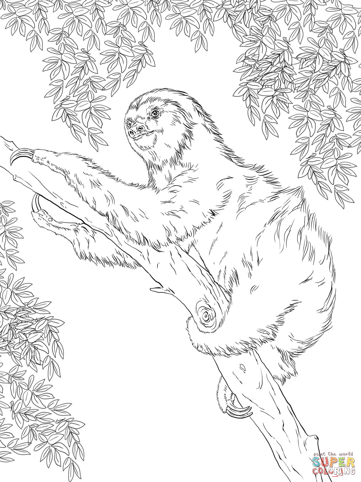 Sloth Coloring Sheets For Boys  Two toed Sloth Coloring Sheet Two Toed Tree Page