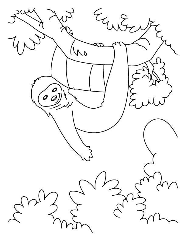 Sloth Coloring Sheets For Boys  sloth coloring page sloth coloring pages