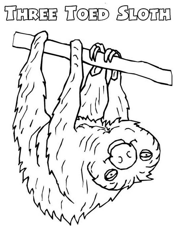 Sloth Coloring Sheets For Boys  Picture Sloth Coloring Page