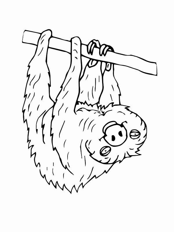Sloth Coloring Sheets For Boys  upside down Colouring Pages