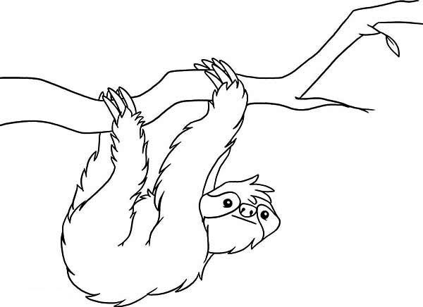 Sloth Coloring Sheets For Boys  Sloth Sloth Coloring Page for Kids