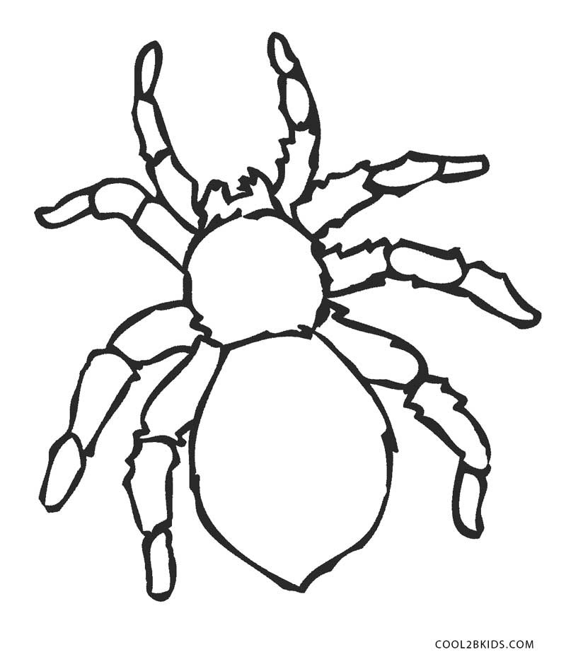 Spider Coloring Pages For Kids  Free Printable Spider Coloring Pages For Kids