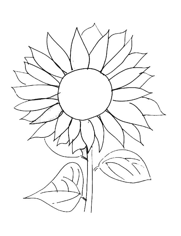 Sunflower Coloring Pages For Adults  Sunflower Coloring Book Pages Sketch Coloring Page
