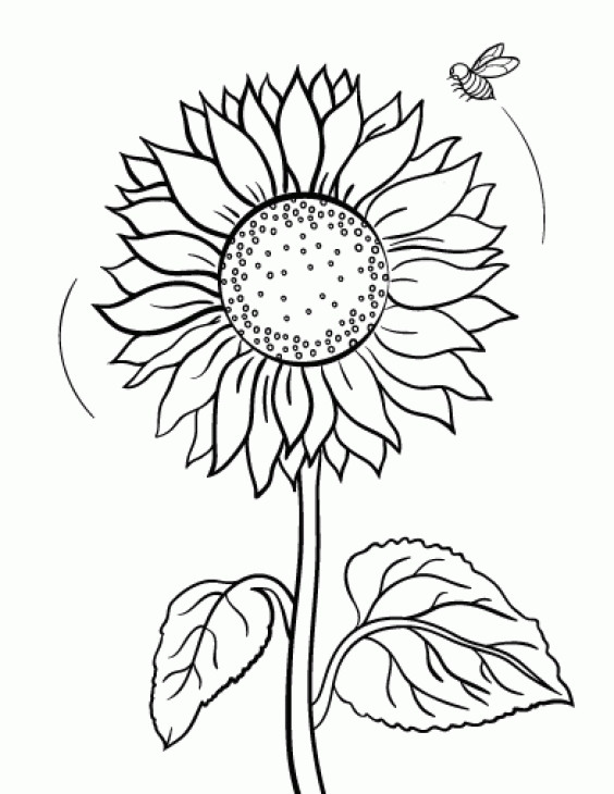 Sunflower Coloring Pages For Adults  sunflower coloring page for adults gianfreda