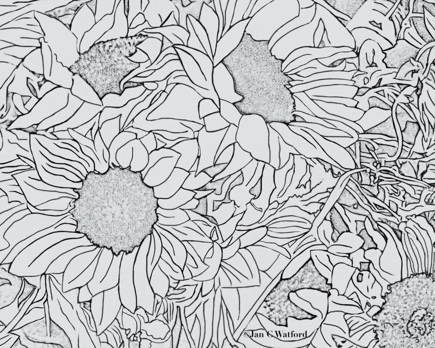 Sunflower Coloring Pages For Adults  Sunflowers 1 Adult Coloring Pages Coloring Page Printable
