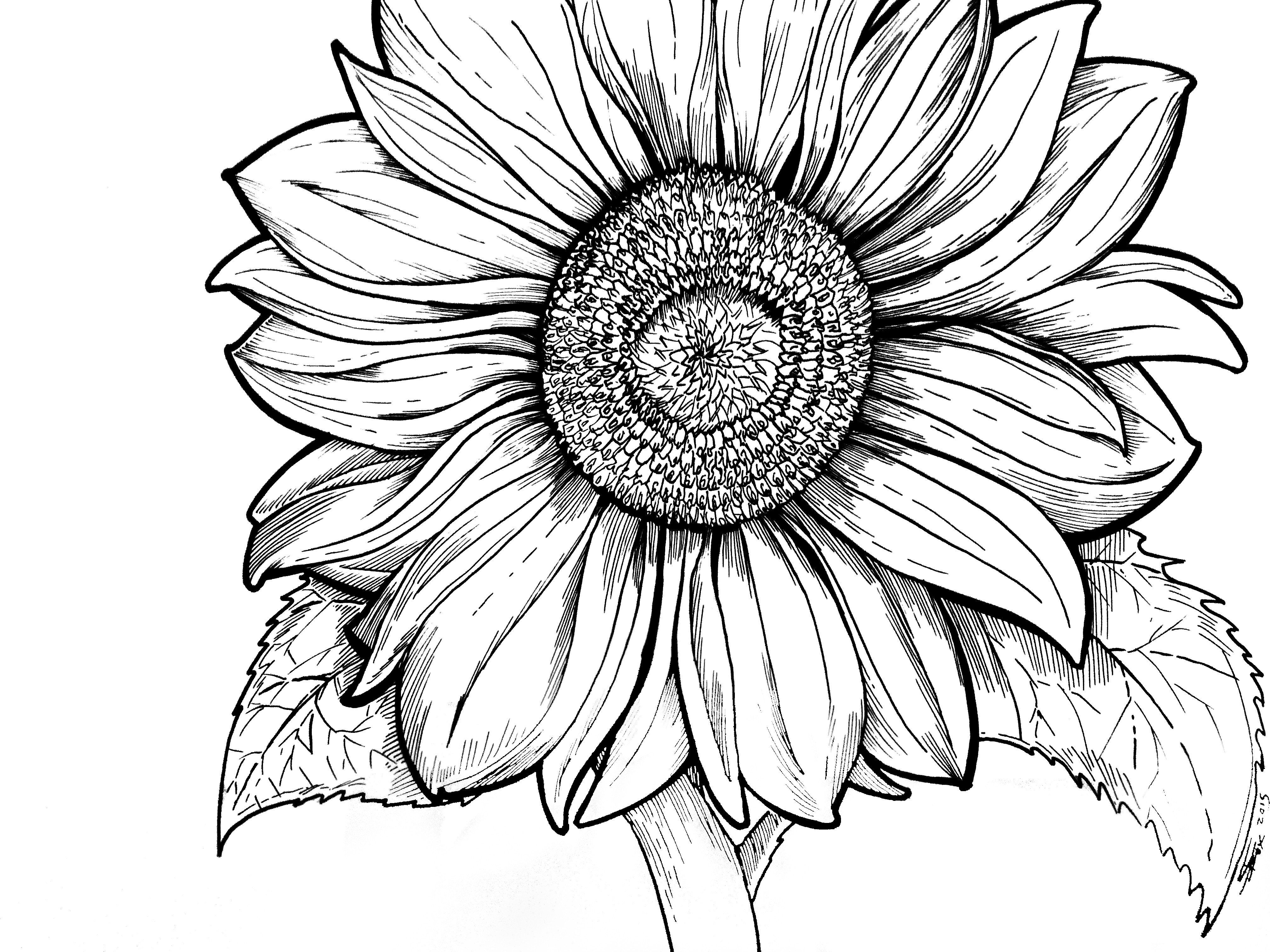 Sunflower Coloring Pages For Adults  Sunflower Adult Coloring Page thekindproject