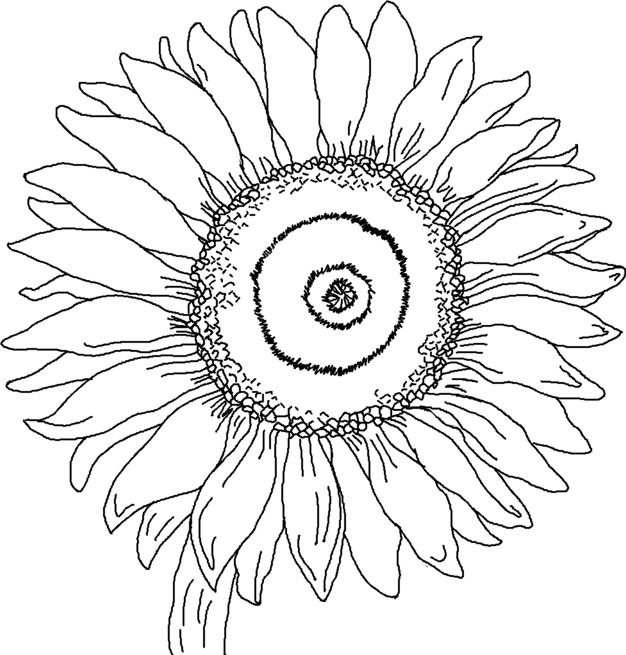 Sunflower Coloring Pages For Adults  Free Printable Sunflower Coloring Pages For Kids