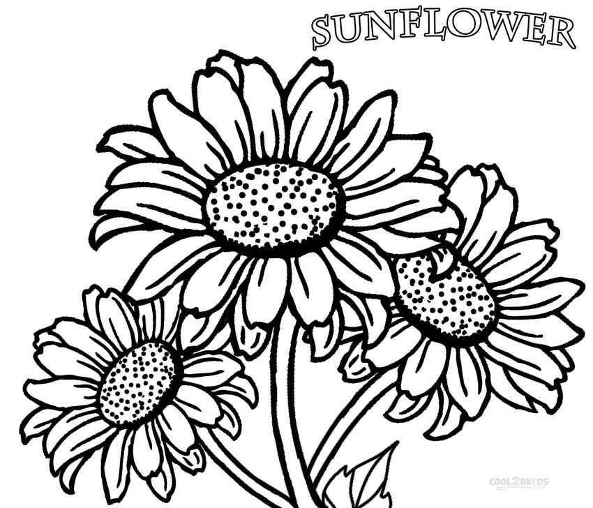 Sunflower Coloring Pages For Adults  Printable Sunflower Coloring Pages For Kids