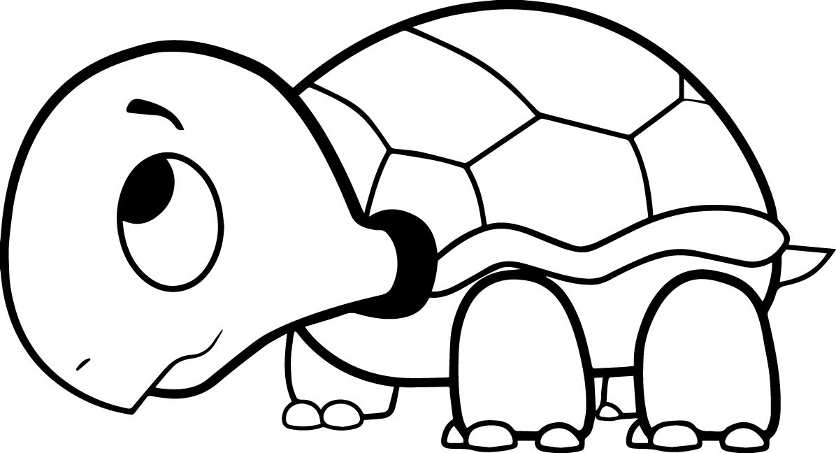 Turtle Coloring Book  Turtle Coloring Pages The Slow Animals Gianfreda