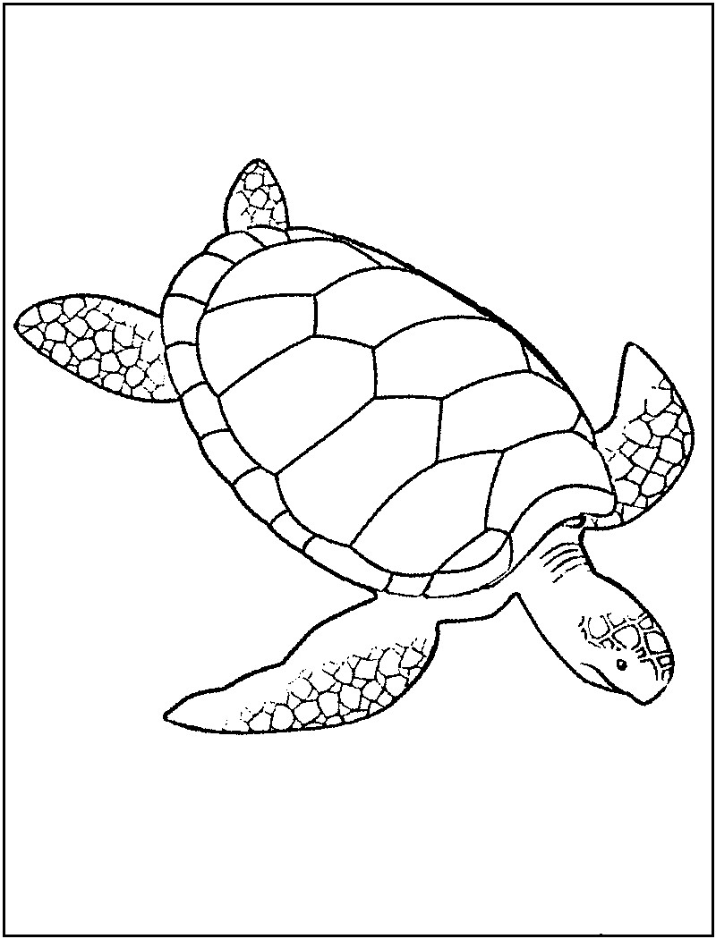 Turtle Coloring Book  Free Printable Turtle Coloring Pages For Kids