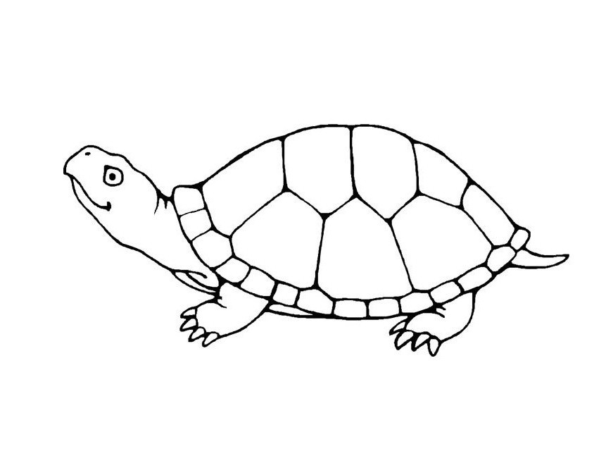 Turtle Coloring Books  Free Printable Turtle Coloring Pages For Kids