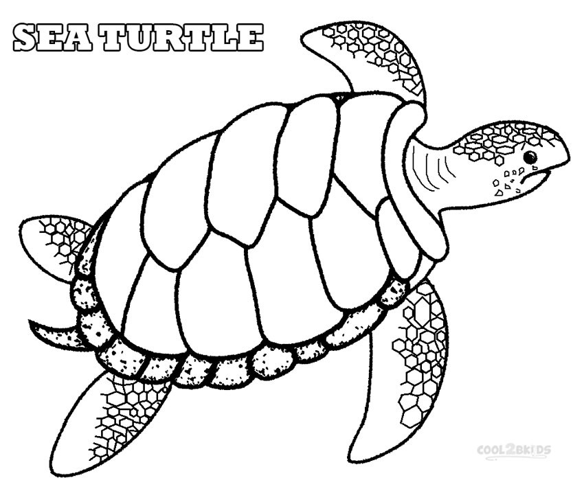 Turtle Coloring Books  Printable Sea Turtle Coloring Pages For Kids