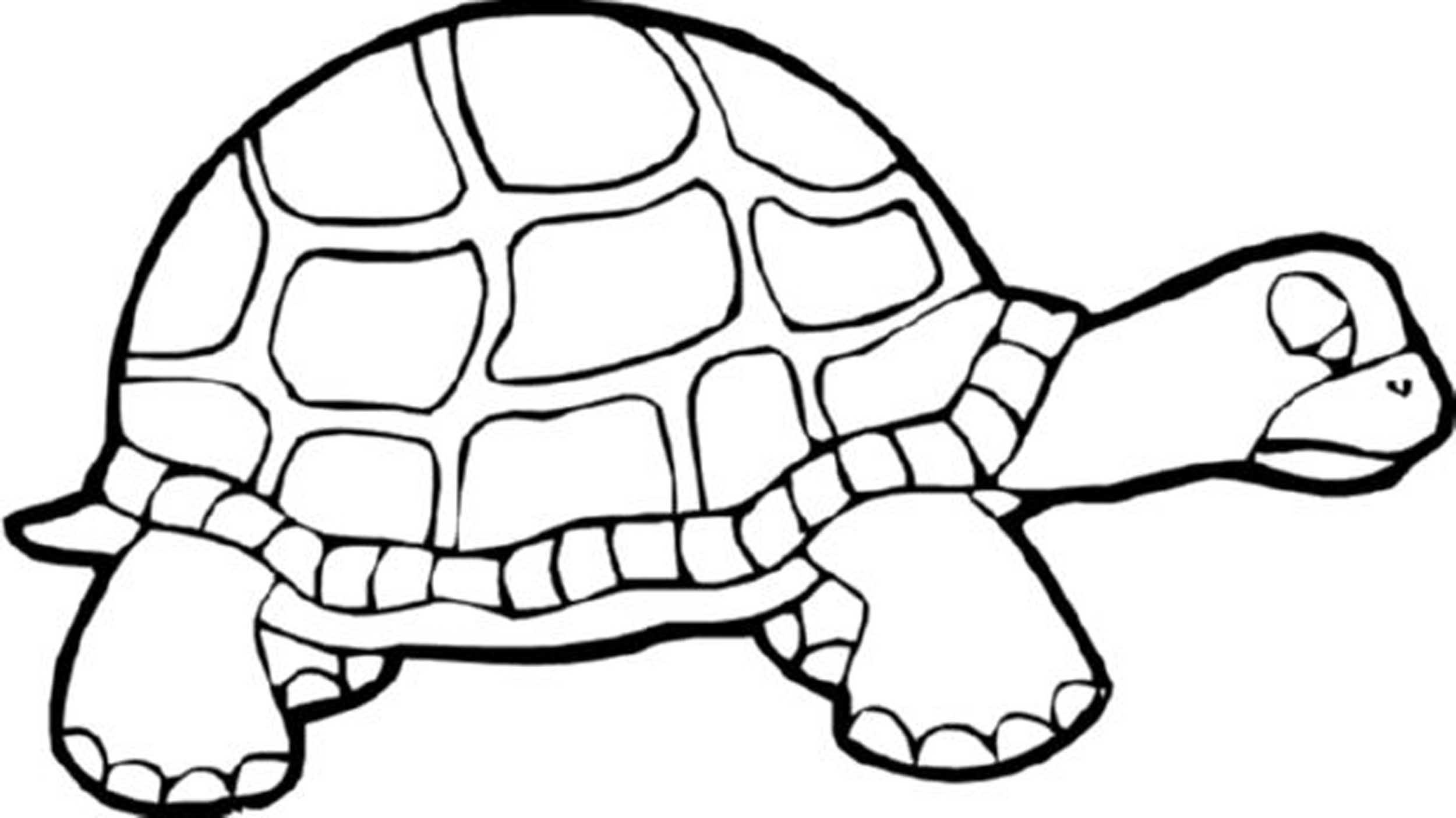 Turtles Coloring Book  Print & Download Turtle Coloring Pages as the