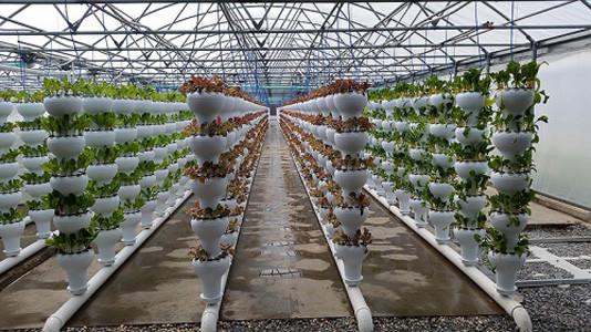Best ideas about Vertical Hydroponic Garden . Save or Pin Foody 8 Vertical Hydroponic Garden Tower Now.